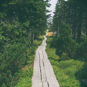Černohorské rašeliniště. Foto: Petr Růžek